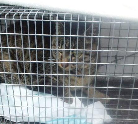 浪江町川房で保護の猫