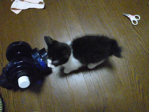 小さいユキさん