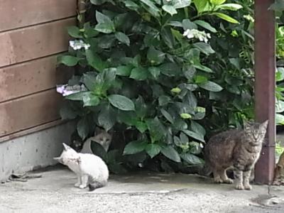 お母さんと兄弟猫