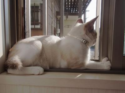 外を眺める「はく」