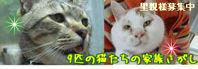 9匹の猫たちの家族さがしサムネイル4