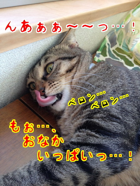 B_Msj7SyDqFCOFL1415366809_1415367283.jpg