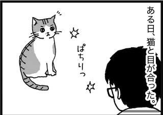 ある日、猫と目が合った。 ぱちりっ