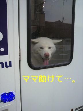 椿201006253