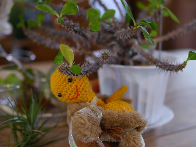 P1140421 可愛い人形と植物