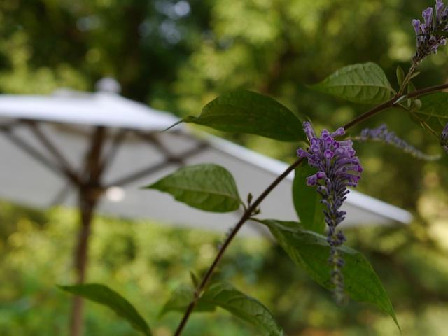 P1140416 白いパラソルと花