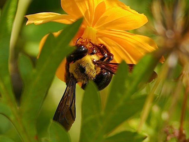 P1150732 花と蜂2