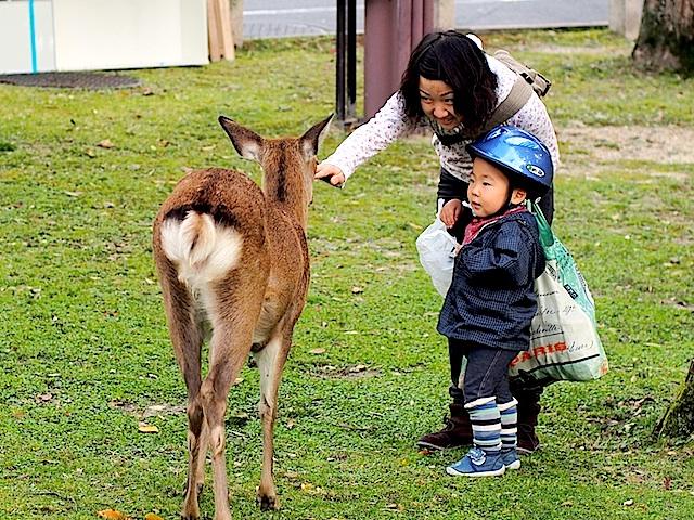 PA310145 鹿と親子1