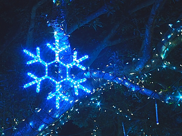 PB160058 雪の結晶1