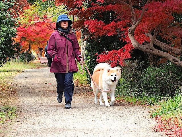 PB260420 犬とお散歩1