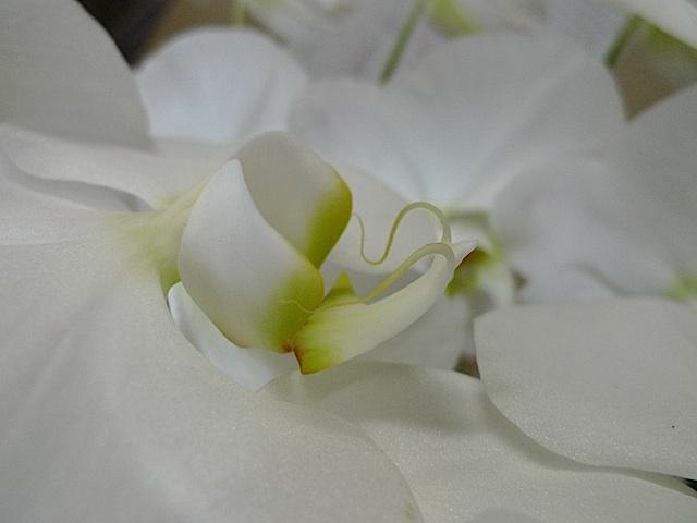 L1050698 ランの花3