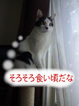 SBSH02581.jpg
