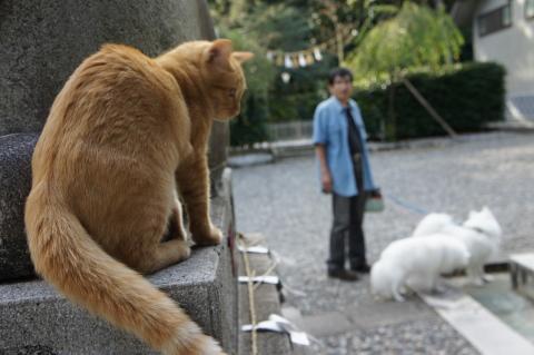 猫とネロマリ