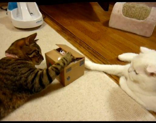 おもちゃ猫