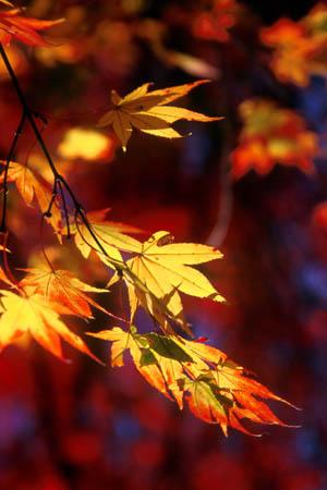 秋 紅葉ブログ