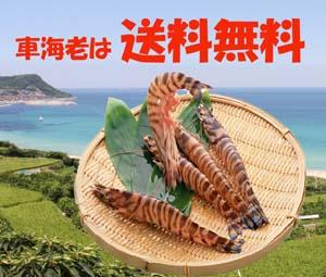 2013秋車海老セールタイトルブログ4