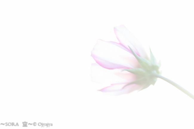 2014101920141-IMG_1690.jpg