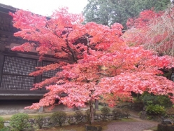 金剛輪寺(1)