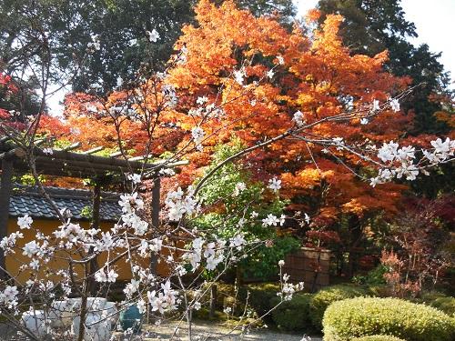 西明寺(3)