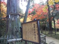 西明寺(8)