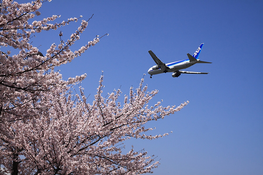 ANA B767-381 ANA23@豊中市利倉周辺(by EOS 50D with SIGMA 18-50mm F2.8 EX DC MACRO)