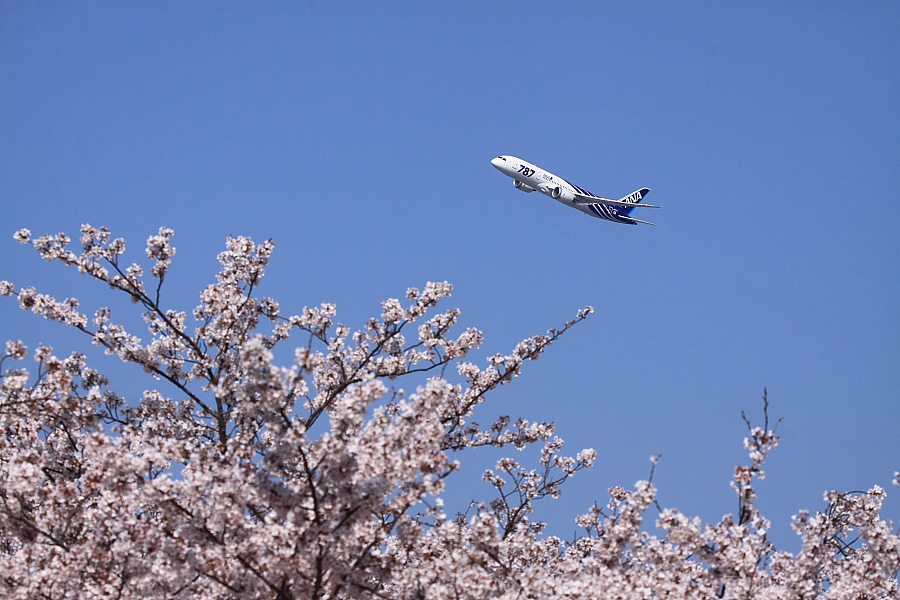 ANA B787-881 ANA30@瑞ヶ池公園(by EOS 50D with EF100-400mm F4.5-5.6L IS USM)