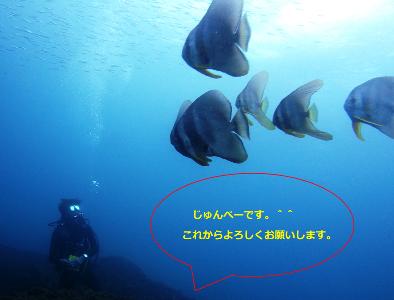 junpei2014111111.png