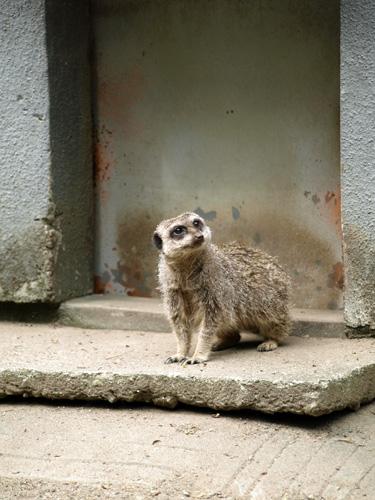 羽村動物園100613-2