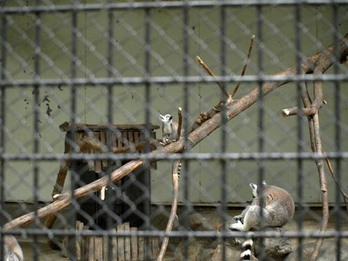 羽村動物園100613-4