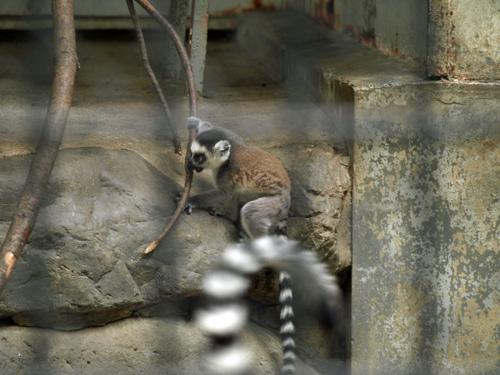 羽村動物園100613-6