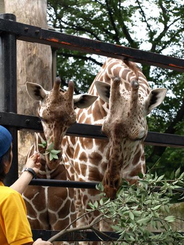 羽村動物園100613-8