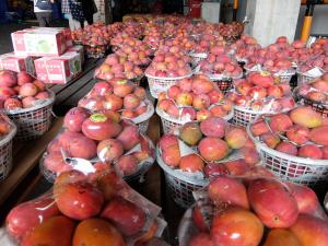 一面のマンゴー1