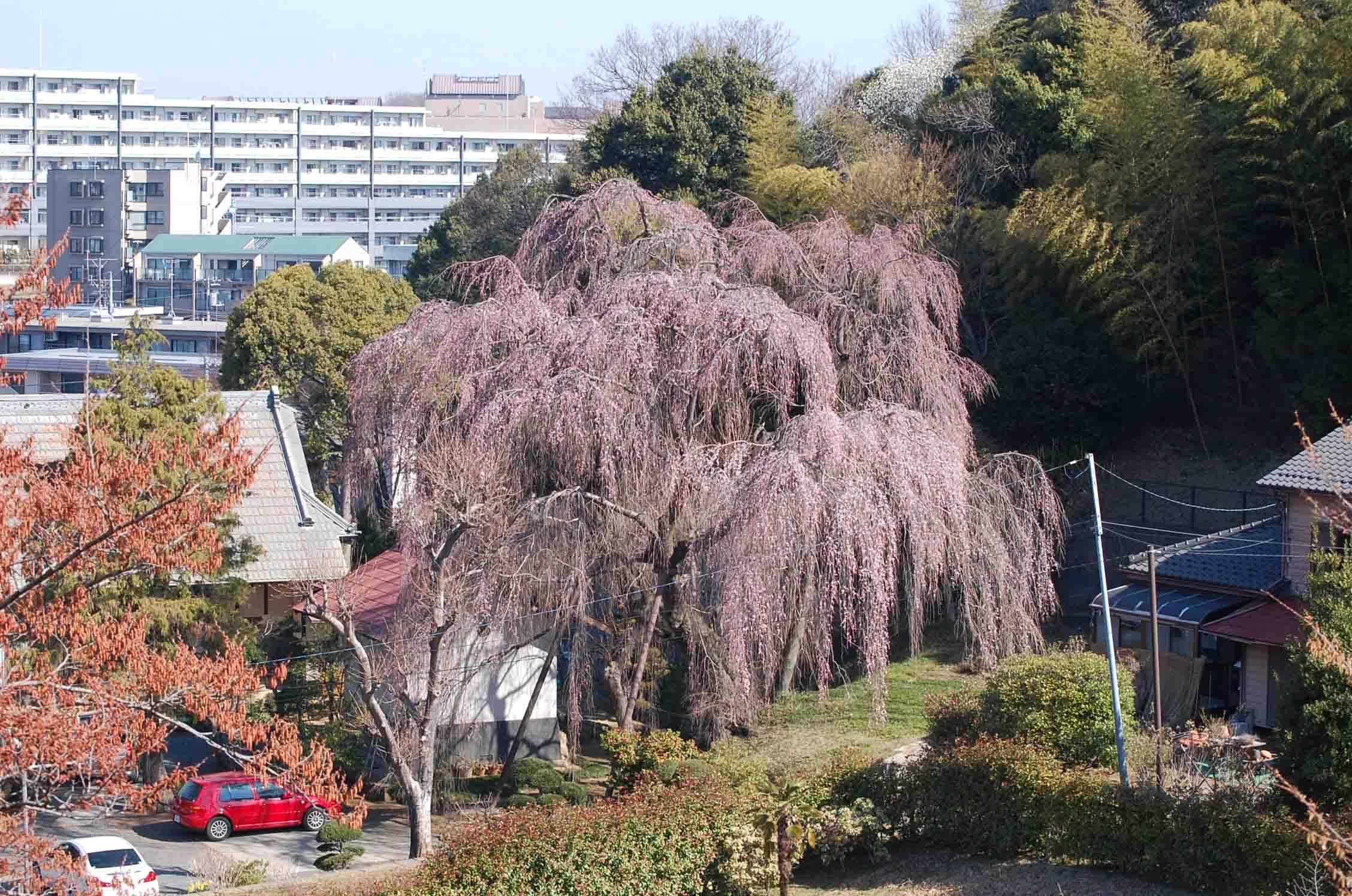 20110401唐木田桜 015A