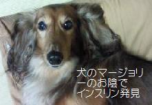 インスリン発見犬