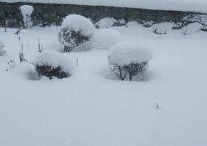 2010-12-29a.jpg