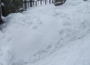 2010-12-29b.jpg