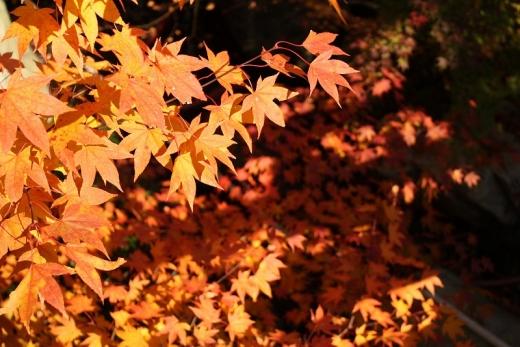2013.11.22 三景園 027