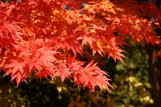 2013.11.22 三景園 026