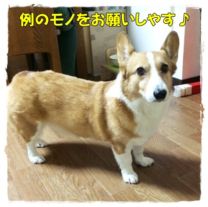 ieoiyashi1.jpg