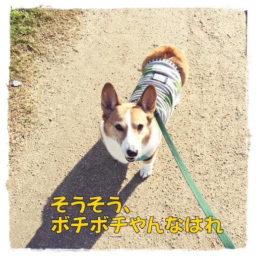 jijiji11.jpg
