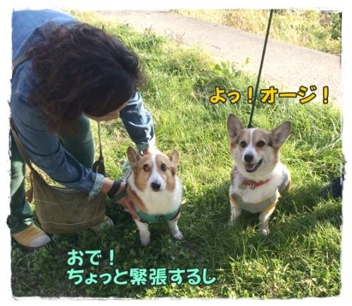 kotajiro1.jpg