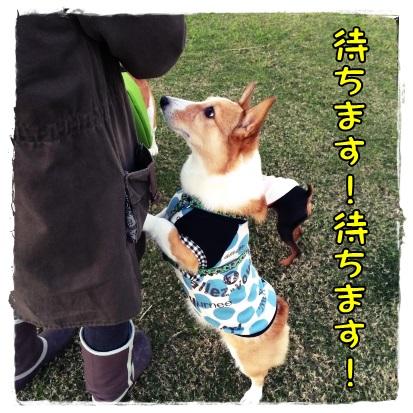 oiyashi1.jpg