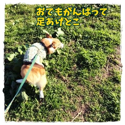osunajiro77.jpg