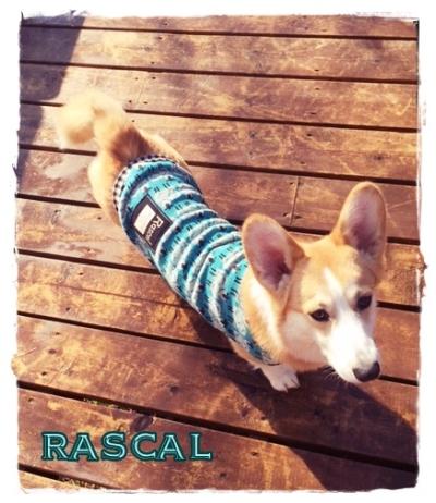 rasucal78.jpg