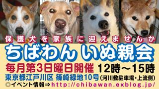 chibawan_teiki_inuoyakai320x180_20120412191653.jpg