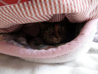 毛布ネコこっちゃん