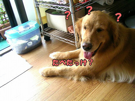 SANY7038_20100817082929.jpg