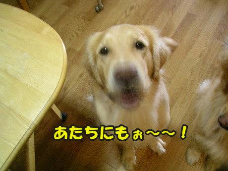 SANY7043_20100831113621.jpg