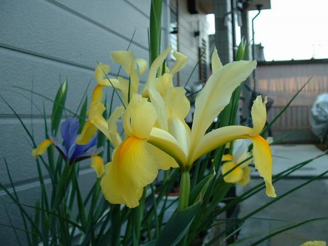 090514--Iris.jpg