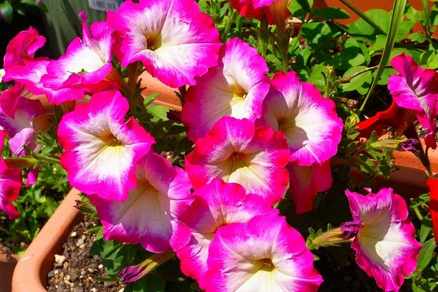110505-flower02.jpg